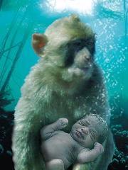 Talk:Aquatic ape hypothesis/Archive 1